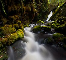 Oliva Creek Wonderland by Nick Skinner