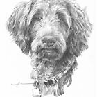 Poodle drawing by Mike Theuer