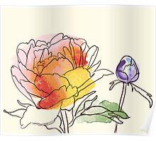 peony flowers Poster