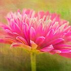 Painted Pink Chrysanthemum by daphsam