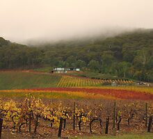 Misty Bright Autumn Vineyard by Pauline Tims