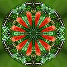 Scarsdale Native Bottlebrush Mandala 1 by haymelter