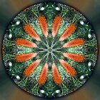 Scarsdale Native Bottlebrush Mandala 2 by haymelter