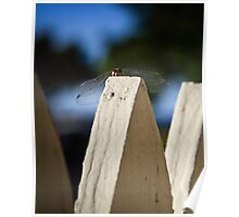 Cool Dude Dragonfly Poster