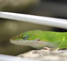 Scaled back Anole by Okeesworld