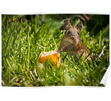 Field Mouse on Alert Poster