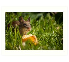 Field Mouse Eating an Apple Art Print