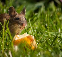 Field Mouse Eating an Apple by Georden