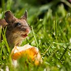 Field Mouse in the Grass by Georden