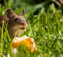 Field Mouse in the Grass by George Davidson