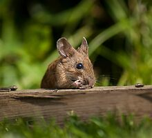 Field Mouse Eating by George Davidson