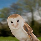 Barn Owl by Aggpup