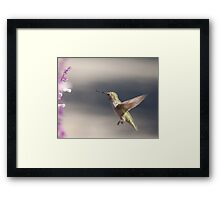 Humming with soft background Framed Print