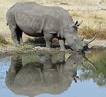 Rhino reflections by jozi1