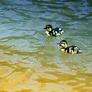*Duck Buddies* by DeeZ (D L Honeycutt)
