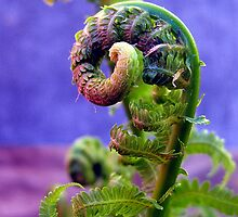 pig tails on a fern by LoreLeft27