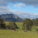 Mt Roland - viewed from near Staverton by gaylene