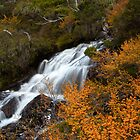 Fagus and Falls  by Cameron B