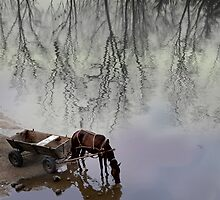 Equine Reflection by Igor Zenin