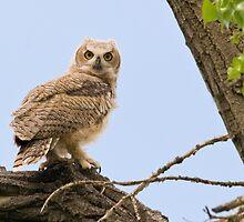 Prospect Owlet by Eivor Kuchta