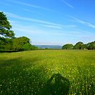 Sussex Meadow by mikebov