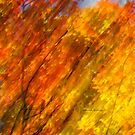 iPhone / iPod Case - Fall burning 2012 by Joseph Rotindo