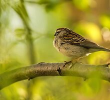 His Eye Is On The Sparrow by Lois  Bryan
