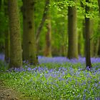 Among The Bluebells  by Stephen J  Dowdell