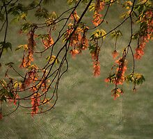 The Maple Tree by vigor