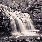 Liffey Falls III by Rosie Appleton