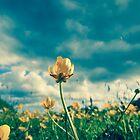 Buttercup by Patrick Horgan