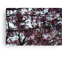 Surrounded by Pink 2 Canvas Print