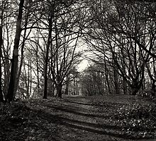 The Woods of the Midlands. by Maybrick