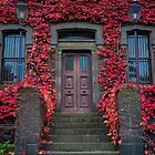 colour door  by MARKATMELB