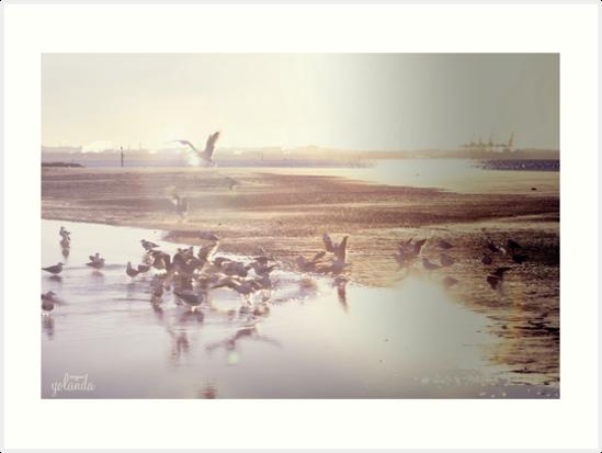 Seagull Sunrise by yolanda