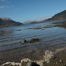 Seagull, Glencoe by cuilcreations