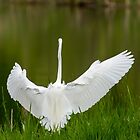The Great Egret 2 by Thomas Young