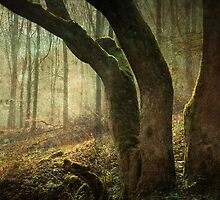 Mystic Woodland by NortheastOne