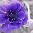Anemone Dream... by Poete100