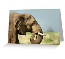 THE AFRICAN ELEPHANT IN PROFILE – Loxodonta Africana - AFRIKA OLIFANT Greeting Card
