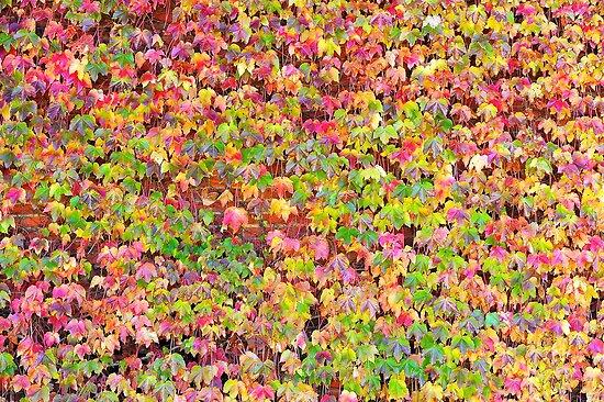 Autumn colours   by helmutk