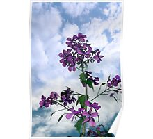 may flowers growing in the wild Poster