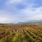 Douro Valley, Portugal by Unwin Photography