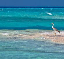 Heron, Maldives by Lucie Mohelnikova