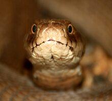 Snake... by shila353