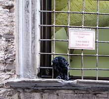 dog in the window by Anne Scantlebury