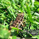little spotted frog by LoreLeft27