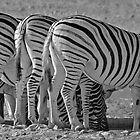 Bottoms up! - Etosha NP Namibia Africa by Beth  Wode