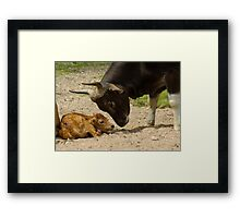 Dad and the baby - a tender moment Framed Print