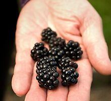 Have some blackberries... by steppeland